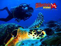 turtles-reef-playa-del-carmen