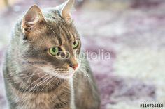 Portrait of a domestic cat with green eyes