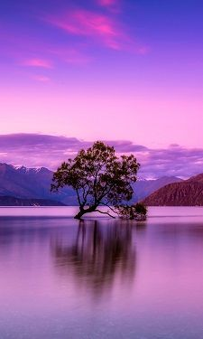 NZ Accommodation Booking Engine - Ezibed NZ Unique Wallpaper, Wallpaper Gallery, Wallpaper Size, Wallpaper Backgrounds, Qhd Wallpaper, Holiday Park, Hotel Motel, Tree Leaves, Simple Colors