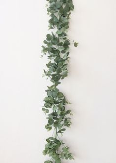Flower Garlands, Eucalyptus Garlands and Wreaths at Afloral Green Garland, Leaf Garland, Flower Garlands, Wedding Flower Arrangements, Wedding Bouquets, Wedding Flowers, Wedding Greenery, Wedding Dresses, Garland Wedding