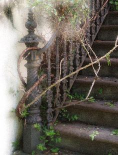 mickoroonie:    simplesue:    medievalmuse:    Photo taken in Savannah, GA by me.