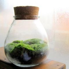 Terrariums are little worlds of fresh green earth.