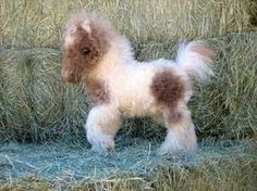 More funny animal pictures here. &n… 27 Funny Baby Animals 27 Funny Baby Animals. More funny animal pictures here. Cute Horses, Pretty Horses, Beautiful Horses, Animals Beautiful, Mini Horses, Funny Horses, Cute Little Animals, Cute Funny Animals, Tiny Baby Animals