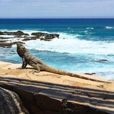 Baja life at Esperanza, An Auberge Resort, Cabo San Lucas, Mexico. Coastalliving.com