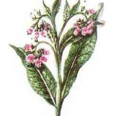 Ce este reumatismul si cum il poti trata in mod natural- partea a II-a - Infuzie de Sănătate Garden Trees, Medical, Health, Plants, Shake, Remedies, Gardens, Fashion, Moda