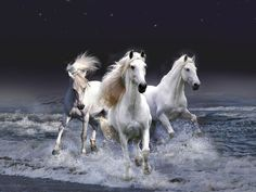 three white horses running in the water