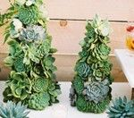 Green succulent trees for christmas #wedding centerpieces?