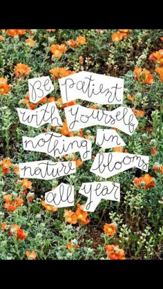 Be patient with yourself, nothing in  nature blooms all year.