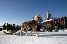 Atelier Kari naturdekorasjoner og kranser: Røros Vacation Memories, Horses, Animals, Atelier, Animales, Animaux, Animal, Animais, Horse