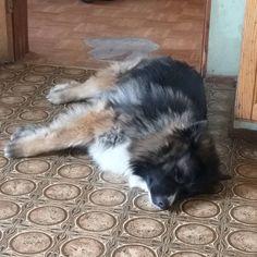 Bella blev trött 🐶😍❤Fina Bella 😍😘🐶 #finabella  #minfinahund  #hemmaigränlandet Corgi, Animals, Corgis, Animales, Animaux, Animal, Animais