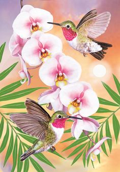 Anna's Hummingbirds with Phalaenopsis