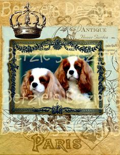 Cavalier King Charles Spaniel/Collage/Photo/Vintage/Print/Card/Blenheim/Friend card. $5.00, via Etsy.
