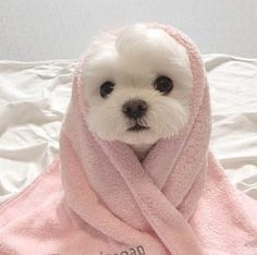 cute dogs - cute dogs ` cute dogs and puppies ` cute dogs breeds ` cute dogs wallpaper ` cute dogs funny ` cute dogs videos ` cute dogs aesthetic ` cute dogs small Baby Animals Super Cute, Cute Little Animals, Cute Funny Animals, Cute Cats, Funny Dogs, Cute Dogs And Cats, Cute Fluffy Dogs, Cute Small Dogs, Baby Animals Pictures