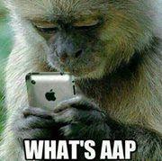 monkey checking out a phone. Monkey see, monkey do!
