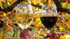 Bodenbakterien sorgen für den Geschmack im Wein - wetter.de Die Bakterien im Boden eines Weinbergs beeinflussen wahrscheinlich weit stärker als bisher angenommen das Wachstum des Rebstocks - und den Geschmack seines Weines. Das berichtet ein Forscherteam um Iratxe Zarraonaindia und Jack Gilbert vom Argonne National Laboratory (US-Staat Illinois) im Online-Fachjournal 'mBio'. Auf und in den oberirdischen Pflanzenteilen - also Blätter, Blüten, Trauben, Zweige - seien die gleichen…