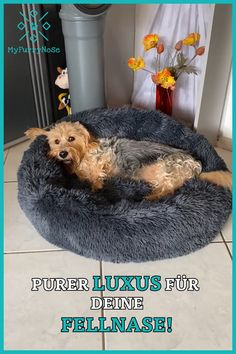 Bring comfort to the next level! Starting at € available 🤑 Do you think that it is finally time for your fur nose 🐶 to sleep in its own bed and not rob you available bring comfort diyart diydecoracion diyeasy diyforteens diygeschenke diyideas Animals And Pets, Baby Animals, Cute Animals, Diy Christmas Videos, Wire Fox Terrier, Large Christmas Baubles, Letting Go Of Him, Craft Projects For Kids, Diy For Teens