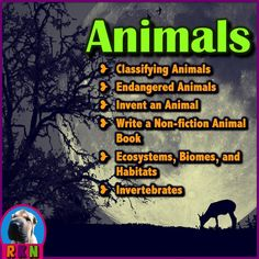 Animal Facts For Kids, Animals For Kids, Writing Activities, Science Activities, Science Lessons, Classroom Activities, Teaching Resources, Classifying Animals, Animal Adaptations