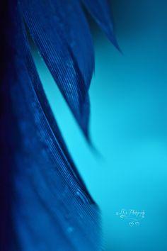 Blue | Blau | Bleu | Azul | Blå | Azul | 蓝色 | Indigo | Color | Form | Texture |