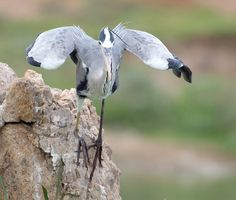 like-the-heron-with-the-snake-fish-shared-10
