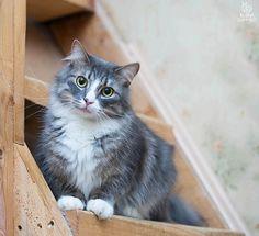 Photo Smoky cat by Elaine Elena S on 500px