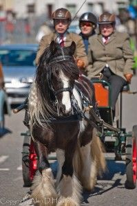 A Harness Horse Is a horse used for driving or pulling heavy loads This Beautiful Photo Was Taken At Barley Saturday Stallion Parade In Card...