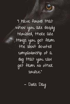 "25 Dog Quotes About Love and Loyalty ""I have found that when you are deeply troubled, there are things you get from the silent devoted companionship of a dog that you can get from no other source. I Love Dogs, Puppy Love, Cute Dogs, Dog Quotes Love, Rescue Dog Quotes, Dog Best Friend Quotes, Dog Loss Quotes, Pet Quotes, Mans Best Friend"