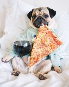 Minipet Online Pet Boutique ist eine in Melbourne ans Silly Dogs, Funny Dogs, Cute Dogs, Cute Little Animals, Cute Funny Animals, Doug The Pug, Baby Pugs, Pet Boutique, Beach Boutique