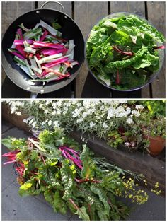 How to Grow and Cook Swiss Chard - this is pretty and colorful in the garden. Glad to know how to cook with it!