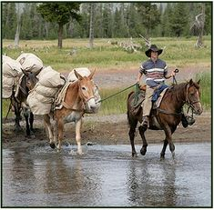 Traveling by horse or mule is the best way to see the reaches of Yellowstone National Park that are seldom seen by most visitors.