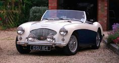 Austin-Healey 100 Buying Guide