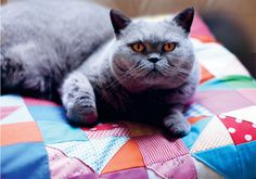 {kitty on a quilt pillow} sweet! + a DIY to make a quilt pillow :)