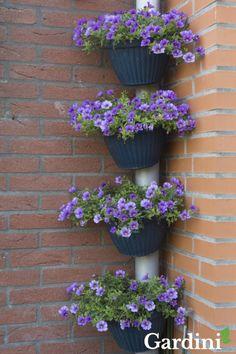 Leuk: vier paarse Calibrachoa fleuren een regenpijp op! Deze plant betovert uw tuin de hele zomer lang door de prachtige ontelbare bloemetjes. De Calibrachoa is er in veel verschillende kleuren.