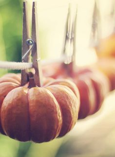 mini pumpkins & gourds hung up by clothespin #Autumn #Decor