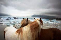 design-dautore.com: ritratti di animali di Tim Flach