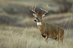 deer - Buscar con Google