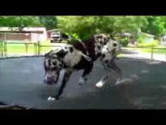 Dogs jumping on Trampolines (Ποτέ δεν θέλω πια να ξαναρθείς) Trampolines, Do Your Best, Winter Is Coming, Nature Pictures, Christmas Diy, Dancing, Crafty, Watch, Youtube