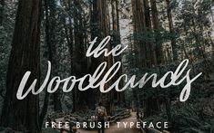 woodlands-brush-typeface