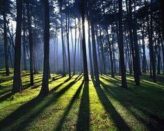 Тень, как и свет является сильнейшим средством, позволяющим создавать неверноятно красивые и эмоционально сильные фотографии. На примере этих 45 фотография, можно увидеть, как благодоря использованию тени, можно создавать первоклассные снимки. Читать целиком: http://lightroom.ru/photomaster/78-45-primerov-ispolzovaniya-teni-v-fotografii.html