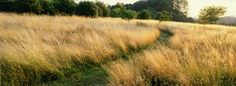 Meadows & praries - Tom Stuart-Smith