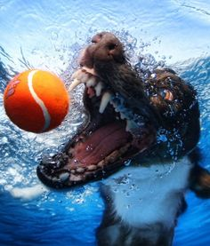 Photographer Seth Casteel's Underwater Dogs Book - PawNation