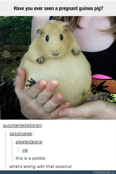 It looks like a Pokemon - Funny tumblr post
