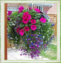 Surfina petunias and Lobelia in hanging basket