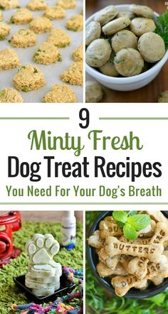 If you dog has, well, doggy breath, you have to check out these SUPER easy minty fresh dog treat recipes.