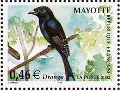 Mayotte Drongo stamps - mainly images - gallery format