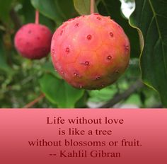 Life without love   is like a tree  without blossoms or fruit.   -- Kahlil Gibran