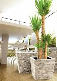 Contemporary Indoor Plants example of indoor plants in a corporate office in burwood and