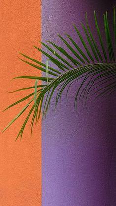 Leaves Wallpaper Iphone, Tumblr Wallpaper, Wallpaper Iphone Cute, Colorful Wallpaper, Aesthetic Iphone Wallpaper, Screen Wallpaper, Galaxy Wallpaper, Nature Wallpaper, Mobile Wallpaper