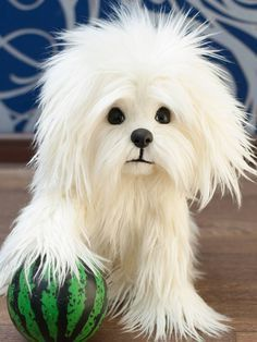 Artist Bears and Handmade Teddy Bears - Bear Pile Maltese Poodle, Maltese Dogs, Teacup Maltese Puppies, Cute Puppies, Dogs And Puppies, Doggies, Puppy Pictures, Animal Pictures, Animals And Pets