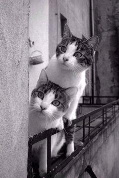 La loca de los Gatos - Página 2