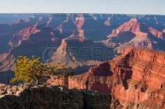 grand canyon national park - Google Search